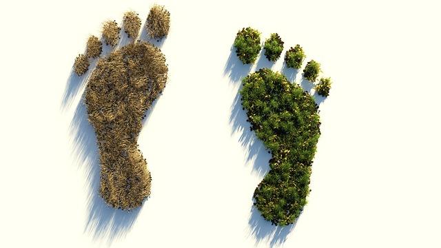 huella ambiental organizaciones